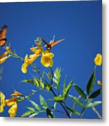 Butterfly In The Sonoran Desert Musuem Metal Print by Donna Greene