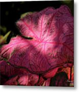 Caladium Mystery Metal Print by Suzanne Gaff