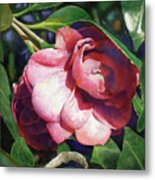 Camellianne Metal Print by Andrew King