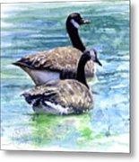 Canada Geese Metal Print by John D Benson