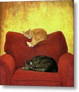 Cats Sleeping On Sofa Metal Print by Nancy J. Koch, Pittsburgh, PA