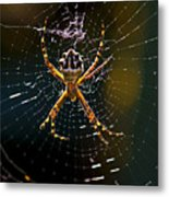 Charlotte's Web Metal Print by Thanh Thuy Nguyen
