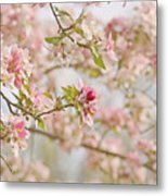Cherry Blossom Delight Metal Print by Kim Hojnacki