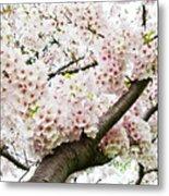 Cherry Blossom Metal Print by Sky Noir Photography by Bill Dickinson