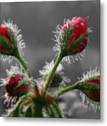 Christmas In May Metal Print by Lori Deiter