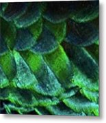 Close Up Of Peacock Feathers Metal Print by MadmàT