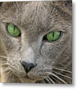 Clyde And His Green Eyes Metal Print by James Steele