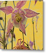 Columbine  Metal Print by Michael Peychich