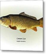 Common Carp Metal Print by Ralph Martens