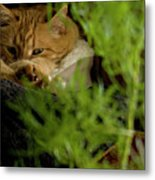 Cozy Cat Metal Print by ShaddowCat Arts - Sherry