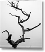 Crooked Tree Metal Print by Matt Hanson