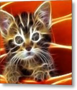 Curious Kitten Metal Print by Pamela Johnson
