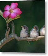 Cute Small Birds Metal Print by Photowork by Sijanto