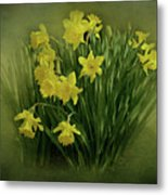 Daffodils Metal Print by Sandy Keeton