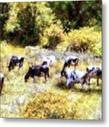Dairy Cows In A Summer Pasture Metal Print by Janine Riley