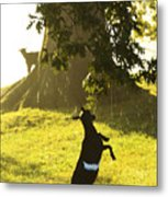 Dancing In The Rain Metal Print by Thomas R Fletcher