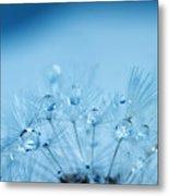 Dandelion Bouquet Metal Print by Rebecca Cozart