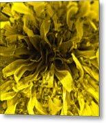 Dandelion Metal Print by Ryan Kelly