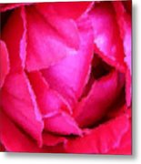 Deep Inside The Rose Metal Print by Kristin Elmquist