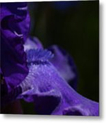 Deep Sparkling Iris Metal Print by Joyce Hutchinson