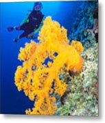 Diving, Australia Metal Print by Dave Fleetham - Printscapes