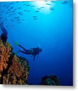 Diving Scene Metal Print by Ed Robinson - Printscapes