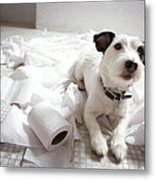 Dog Lying On Bathroom Floor Amongst Shredded Lavatory Paper Metal Print by Chris Amaral
