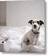Dog Sitting On Bathroom Floor Amongst Shredded Lavatory Paper Metal Print by Chris Amaral