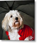 Dog Under Umbrella Metal Print by Elena Elisseeva