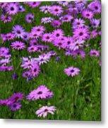 Dreaming Of Purple Daisies  Metal Print by Carol Groenen