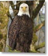 Eagle Eyes Metal Print by Angie Vogel