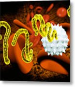 Ebola Virus Metal Print by Victor Habbick Visions and SPL and Photo Researchers