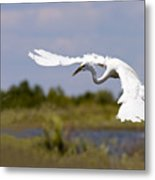Egret Ballet Metal Print by Mike  Dawson