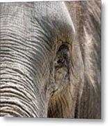 Elephant Eye Metal Print by Jeannie Burleson