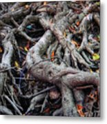 Entanglement Metal Print by Donna Blackhall