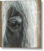 Equine Eye Detail Metal Print by Terry Kirkland Cook
