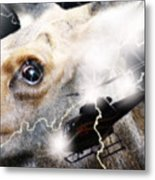 Extreme Fear Metal Print by Cathy  Beharriell