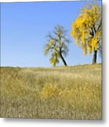 Fall Days In Fort Collins Co Metal Print by James Steele