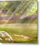 Farm - Geese -  Birds Of A Feather - Panorama Metal Print by Mike Savad