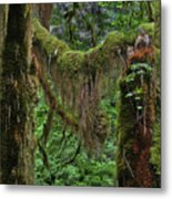 Fascinating Hoh Valley - Hoh Rain Forest Olympic National Park Onp Wa Usa Metal Print by Christine Till