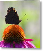 Feel The Summer  Metal Print by Angela Doelling AD DESIGN Photo and PhotoArt