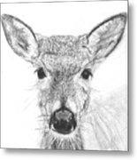 Female White-tailed Deer Metal Print by Marqueta Graham