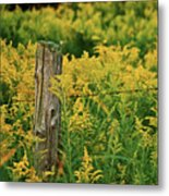 Fence Post7139 Metal Print by Michael Peychich