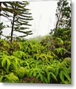 Fern And Norfolk II Metal Print by Ron Dahlquist - Printscapes