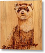 Ferret Metal Print by Ron Haist