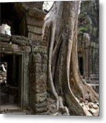 Fig Tree Growing Over Crumbling Ruins Metal Print by Rebecca Hale