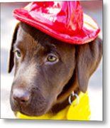 Firefighter Pup Metal Print by Toni Hopper
