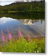 Fireweed Reflections Metal Print by Mike  Dawson