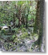 Florida Landscape - Lithia Springs Metal Print by Carol Groenen