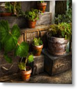 Flower - Plant - A Summers Soak  Metal Print by Mike Savad